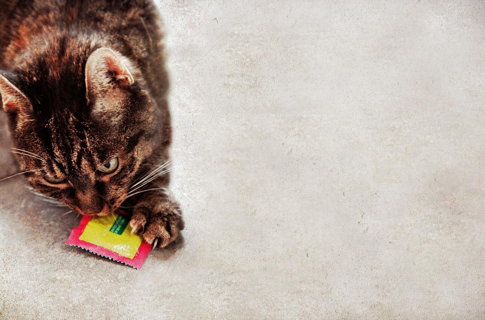 Warum die Kastration von Hund und Katze so wichtig ist