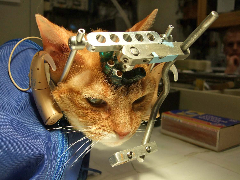 Bildmaterial enthüllt grausame Tierversuche an Katzen