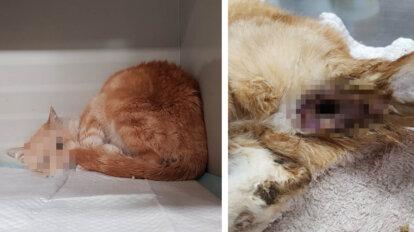 Misshandelte Katze