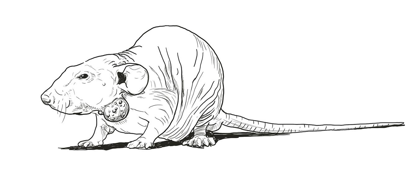 Tierversuche an Mäusen Skizze