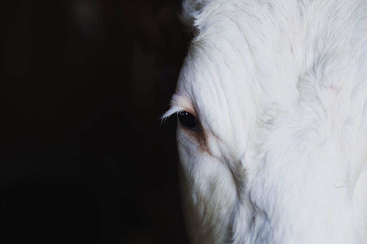 Tierdoku: Die 5 besten Dokumentationen über Tierrechte