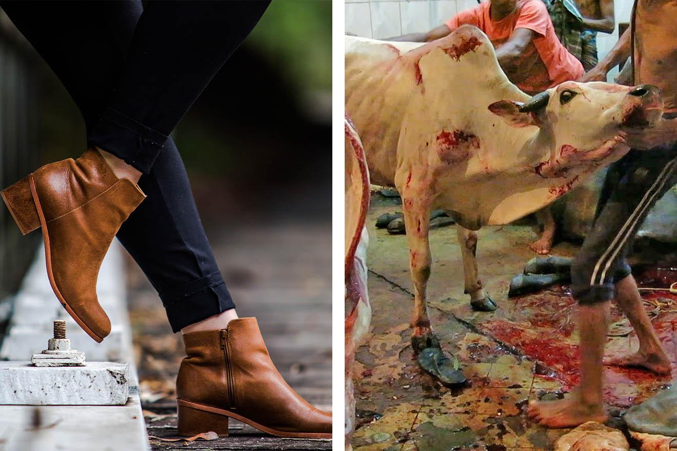 Lederschuhe: Umweltzerstörung, Tierleid und Sklaverei