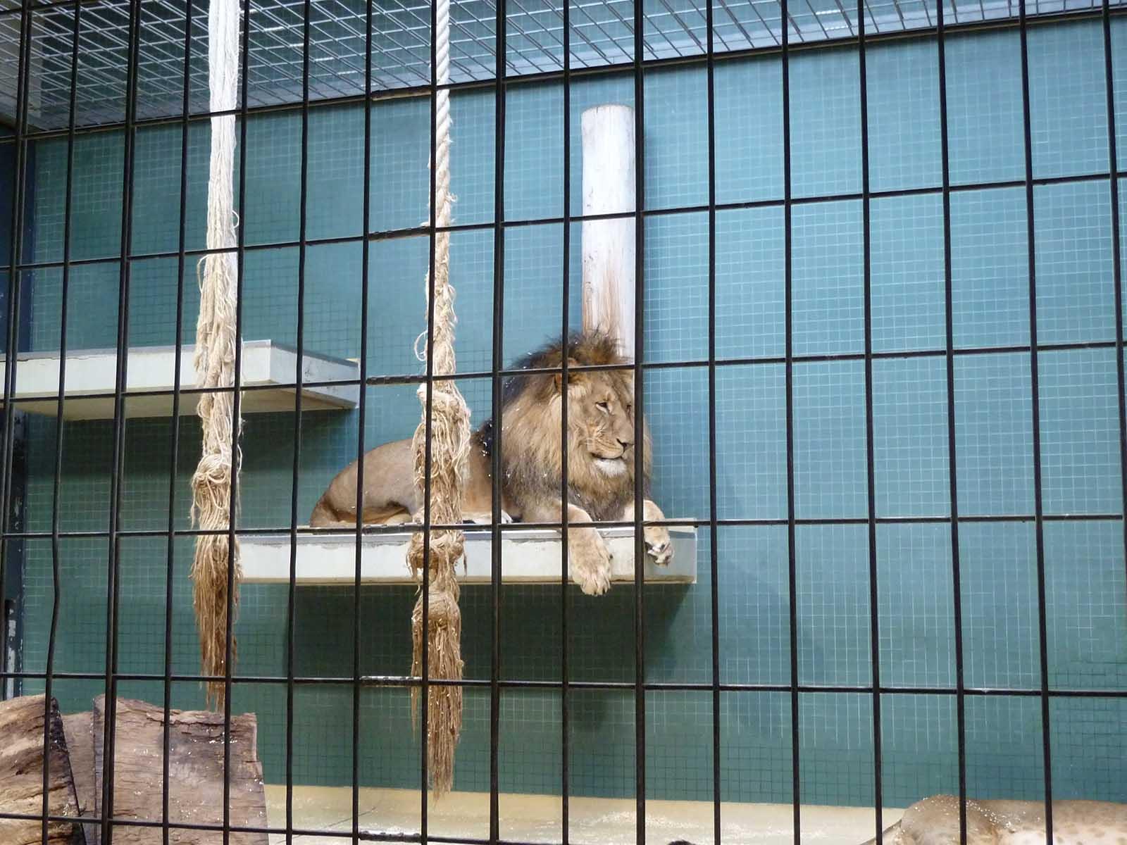 Die 8 größten Irrtümer über Zoos