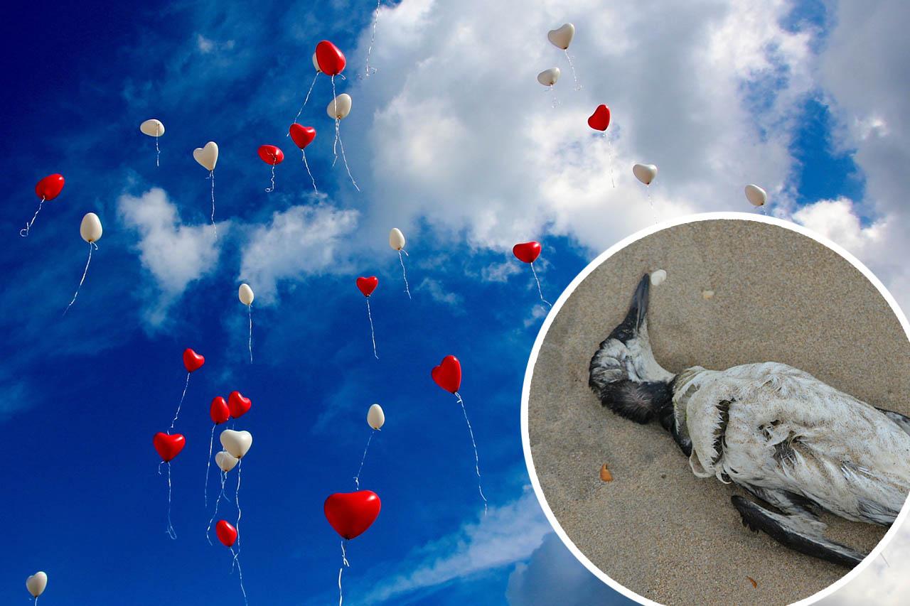 Warum Luftballons zur Hochzeit eine Gefahr für Tiere sind