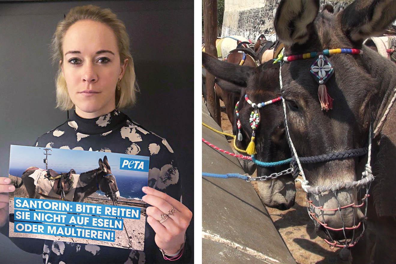 """Deutsche Biathletin Maren Hammerschmidt setzt Zeichen gegen die Ausbeutung von Eseln und Maultieren als """"Taxis"""" auf Santorin"""
