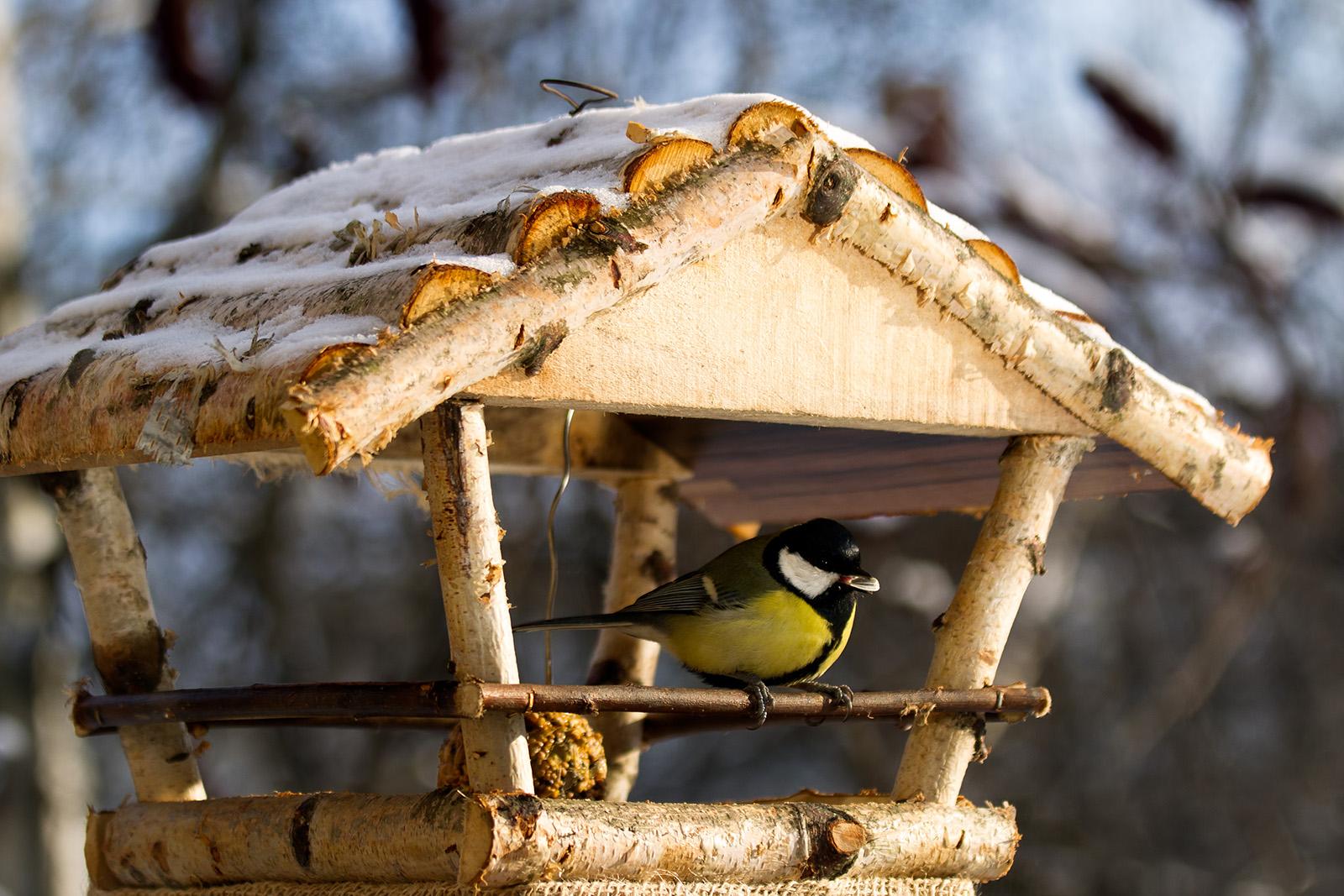 Hilfe f r v gel im winter tipps f r einen - Futterhaus selber ...