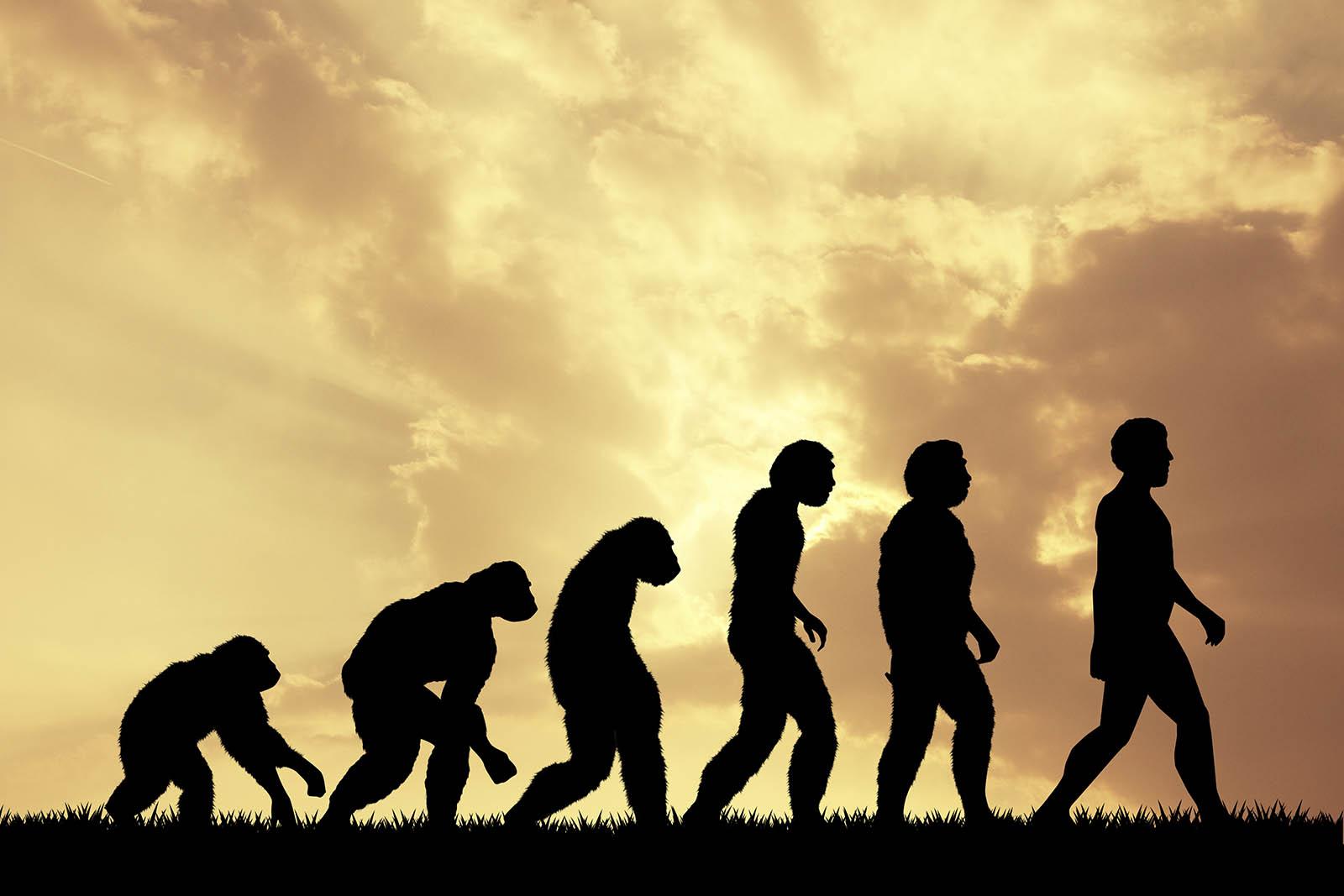 Stammen wir Menschen vom Affen ab?