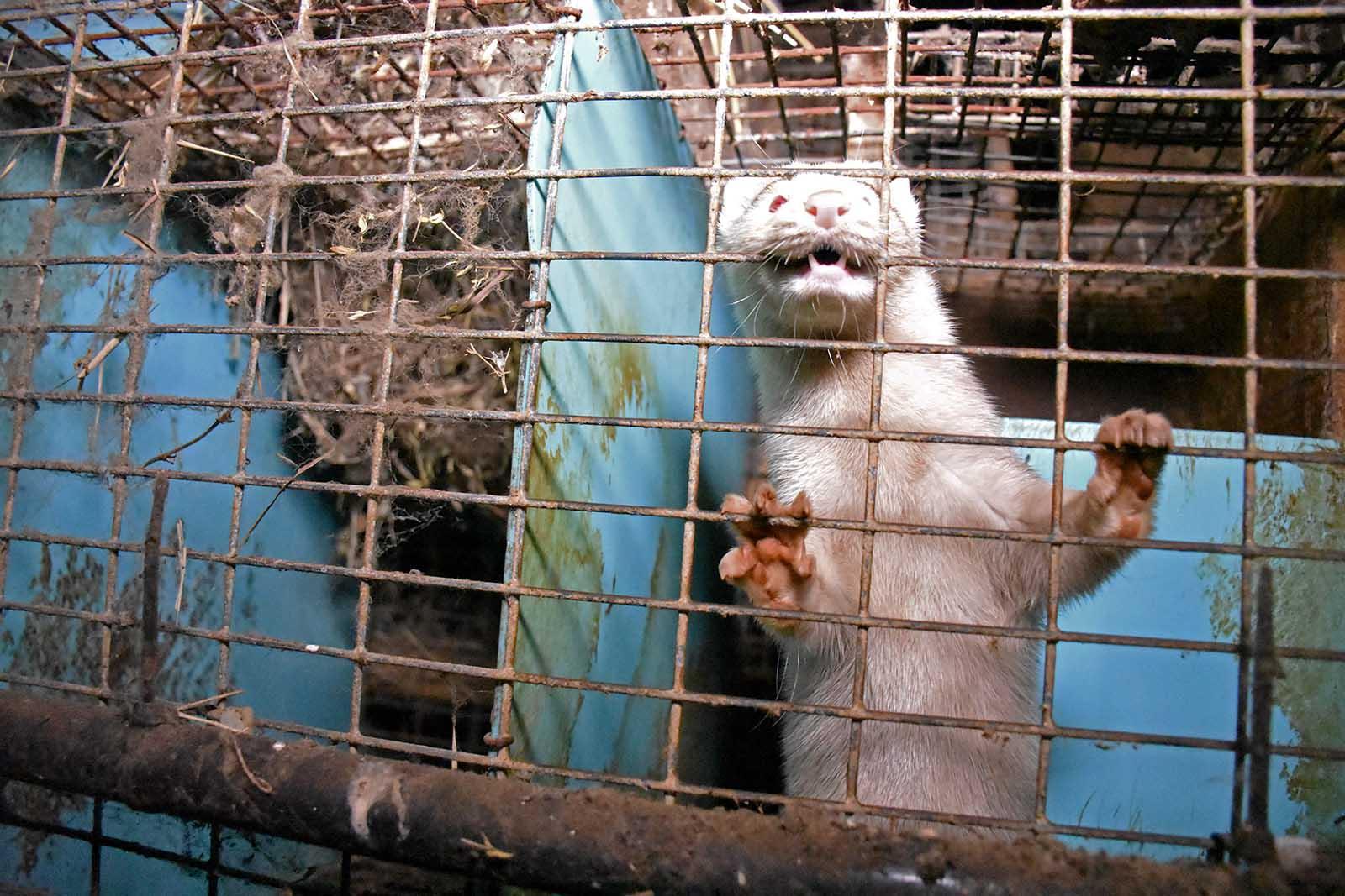 Escada verkauft wieder Pelz – jetzt Petition unterschreiben!