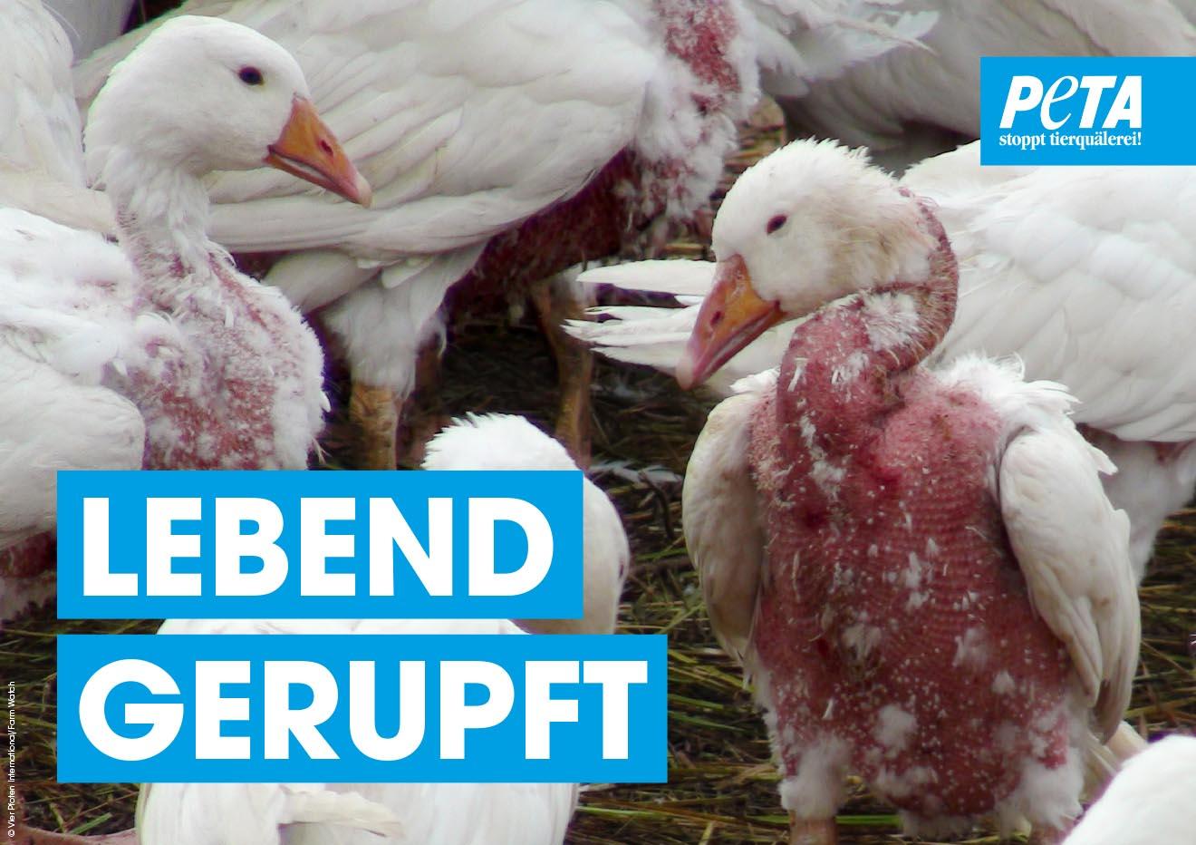 Aktion gegen Daunen: Kostenloses Demopaket jetzt bestellen!