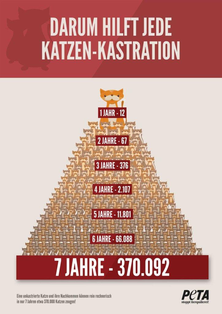 Katzenkastration Infografik