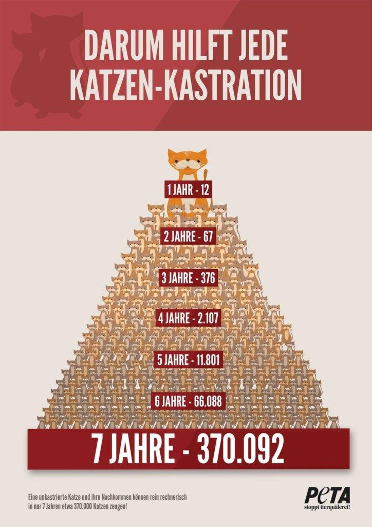 Infografik Katzenkastration