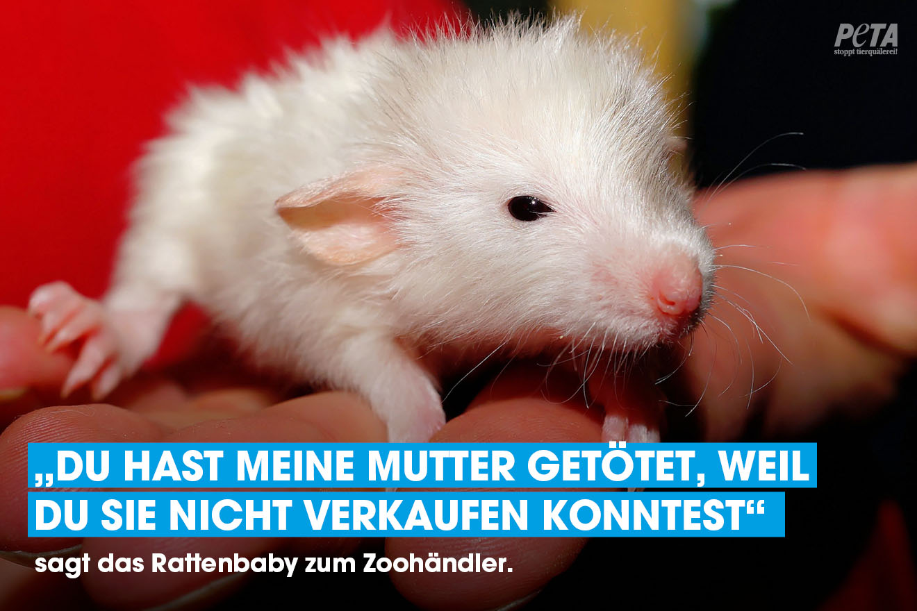 Ratte Tierausbeutung Muttertag