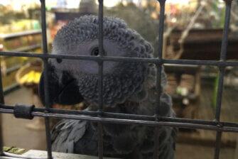 Zoohandlungen: Tierqual zu Dumpingpreisen
