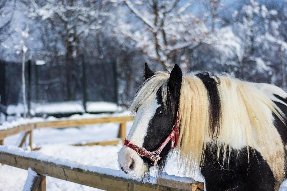 Pferd auf der eingeschneiten Koppel