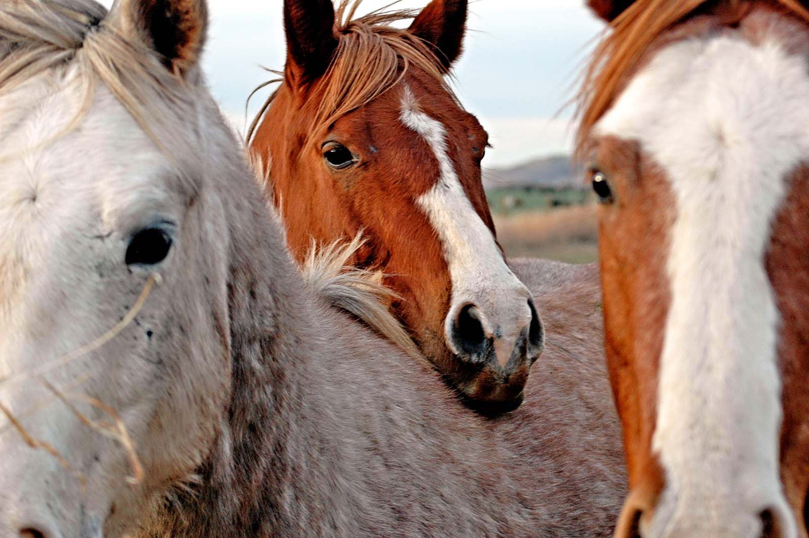 Erfolg! Keine Pferdekutschen mehr in Barcelona und Montreal