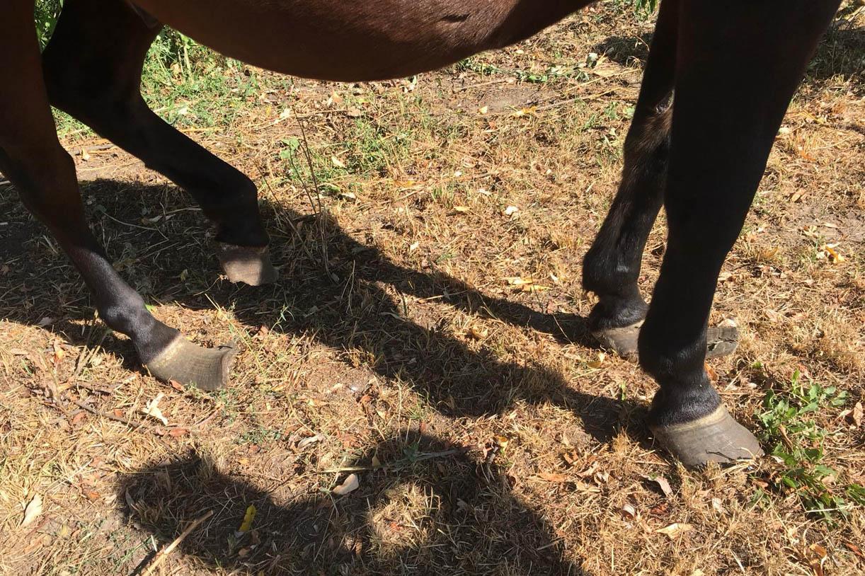 Schrecklich Diese Pferde Wurden Völlig Verwahrlost Zurückgelassen