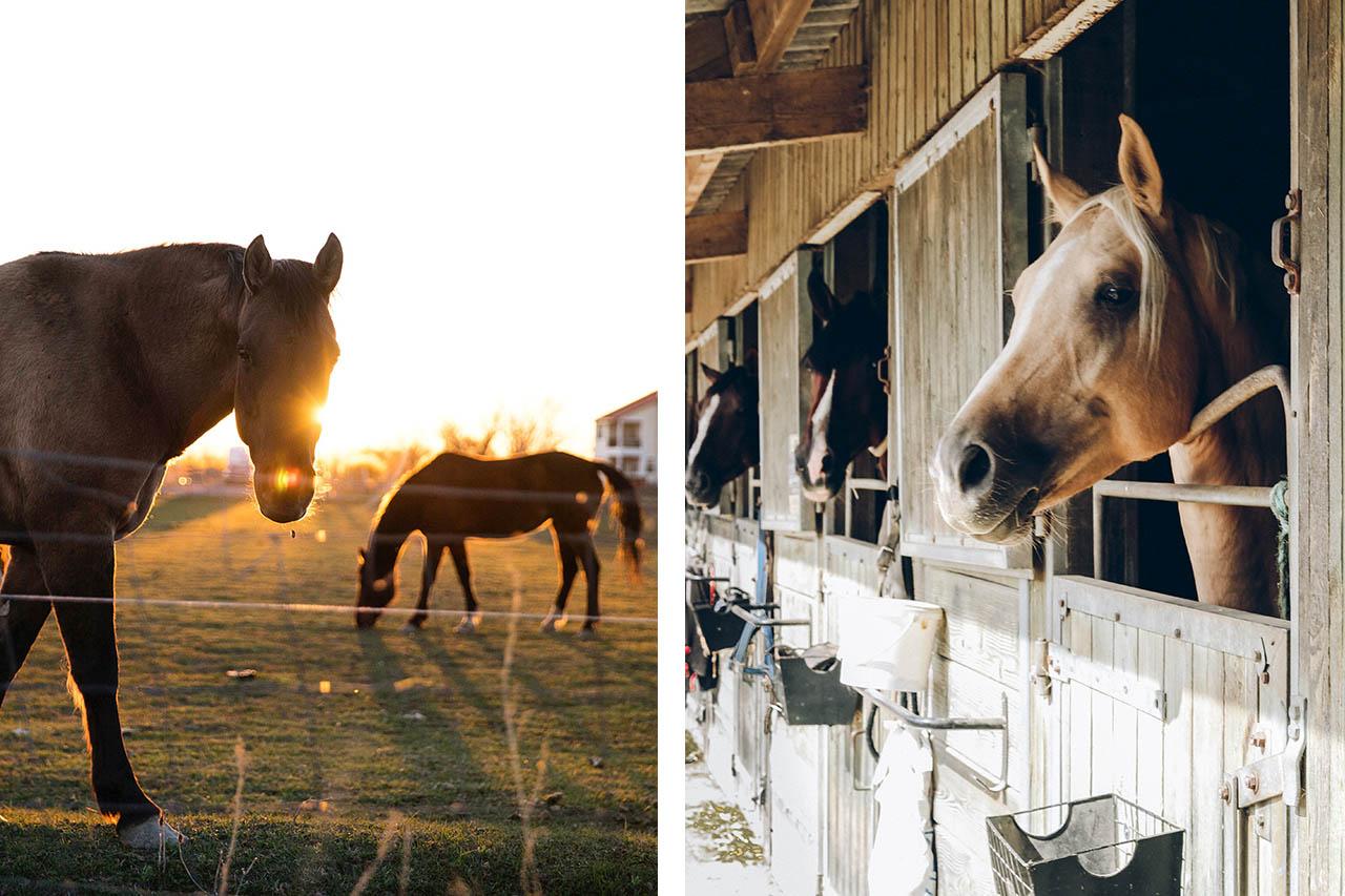 Pferdehaltung: Offenstall oder Boxen – was ist besser für die Tiere?