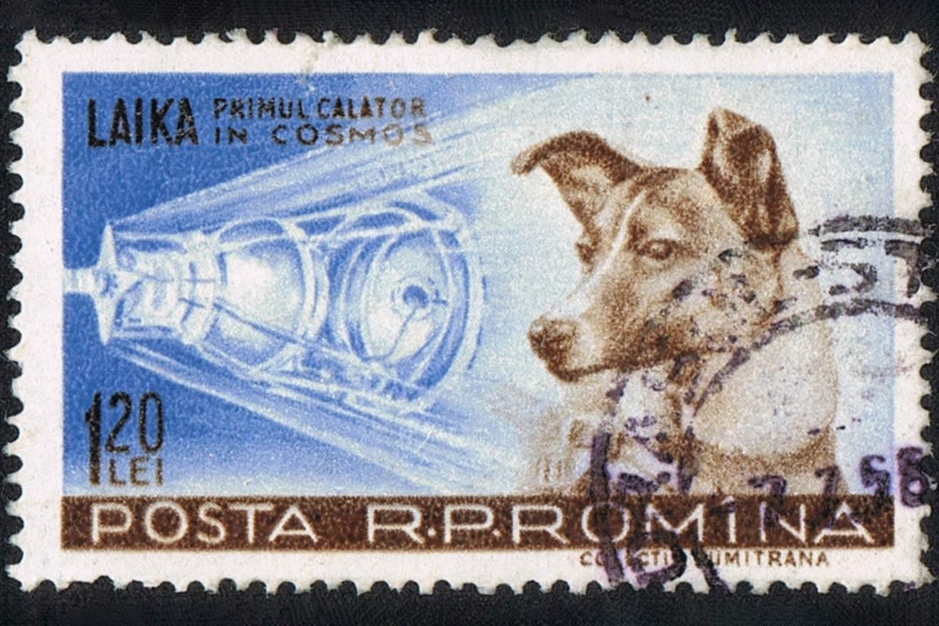 Hündin Laika – 7 Fakten über das erste Lebewesen im Weltall