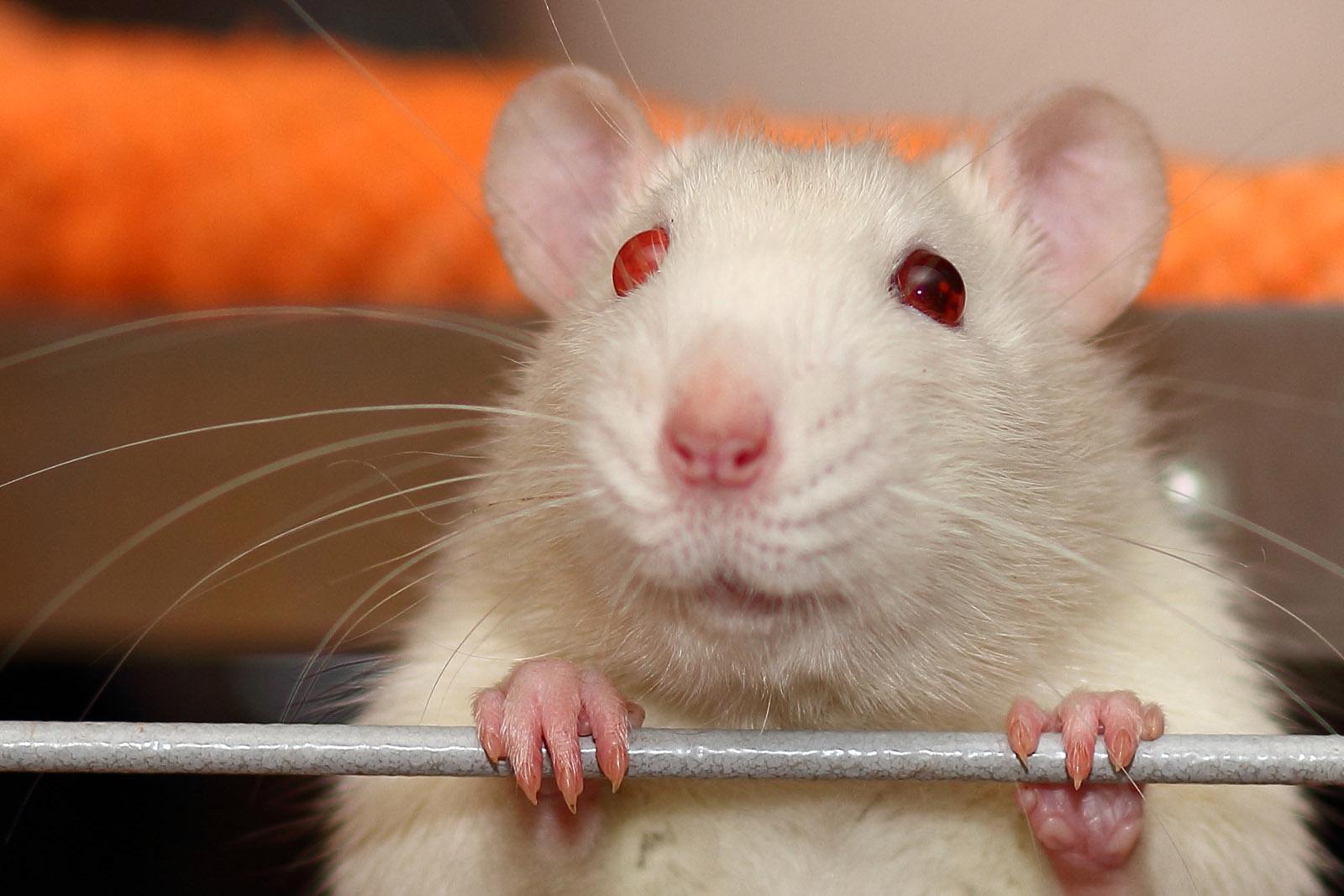 PETA empfiehlt auch weiterhin Produkte von The Body Shop zu kaufen