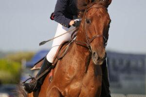 Reiter auf Pferd mit Peitsche