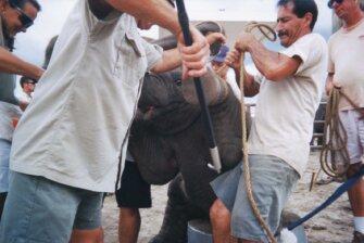 Die Dressur von Wildtieren - das grausamste Training der Welt