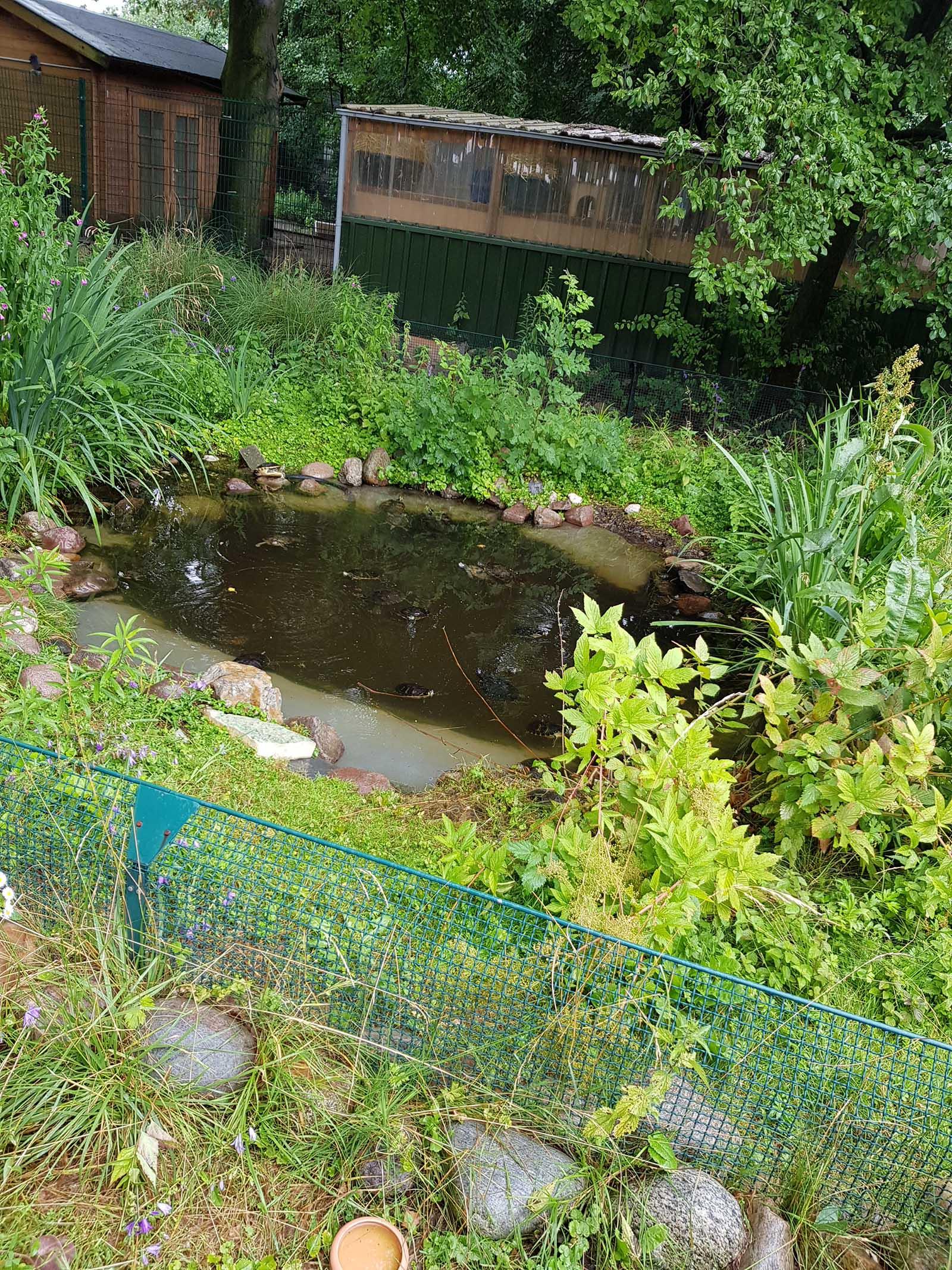 Schildkroeten in einem Teich