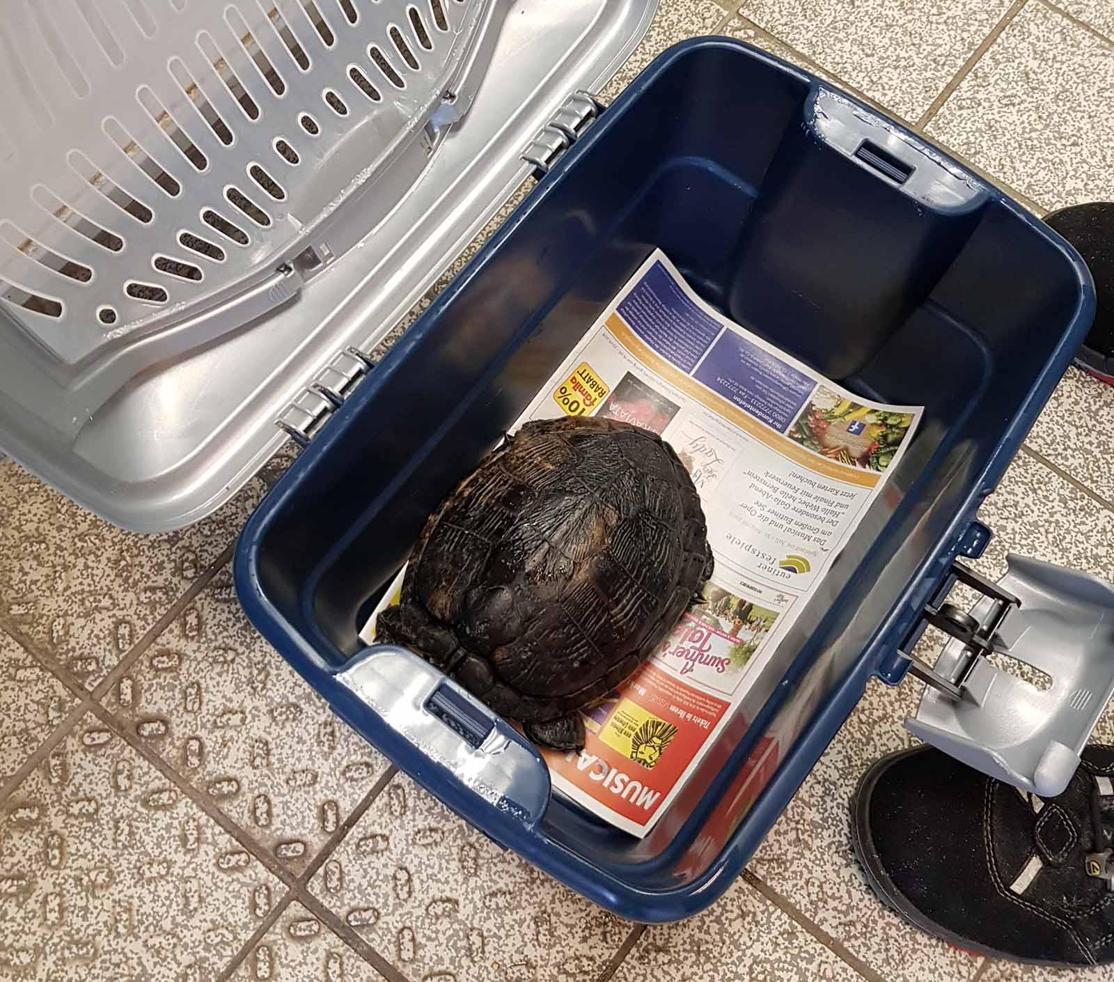 Erfolg: Diese Schildkröte wurde aus einer Hamburger Schule gerettet