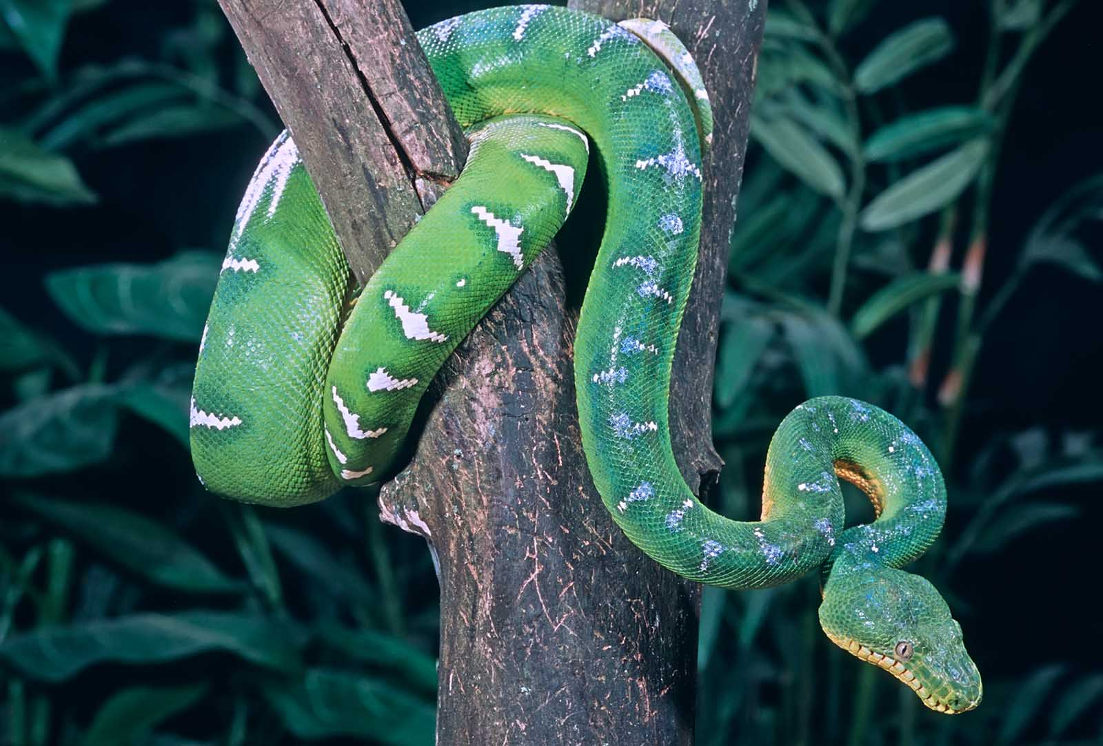 Exoten-Trend: Schlangen und Echsen entkommen aus Terrarien