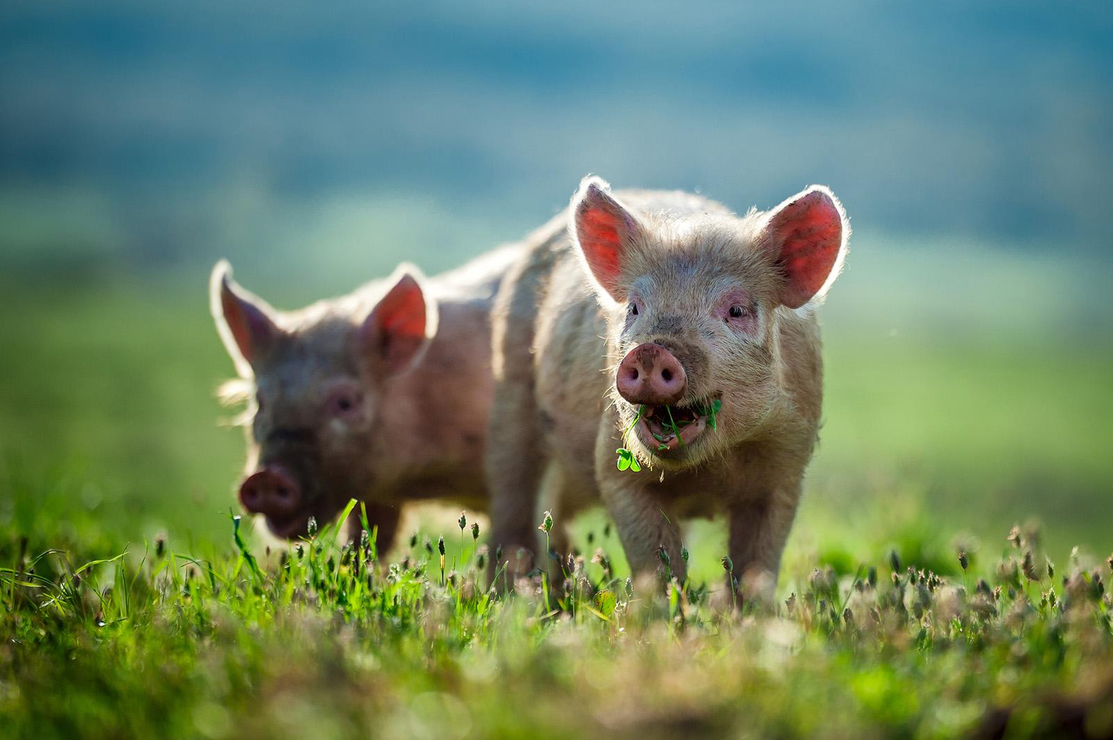 Tierrechte: Warum sollten Tiere Rechte haben?