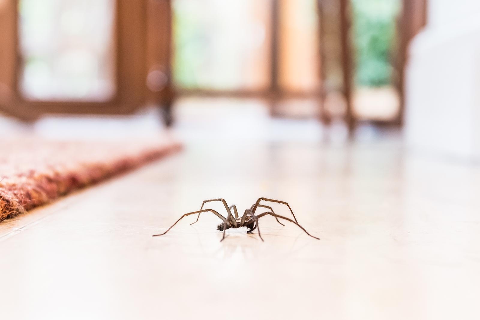 Arachnophobie: Was tun bei Angst vor Spinnen? Tipps & Infos