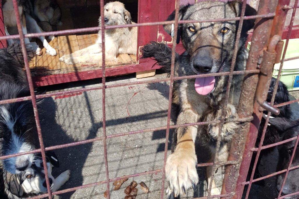 Hunde im Tierheim in Rumaenien
