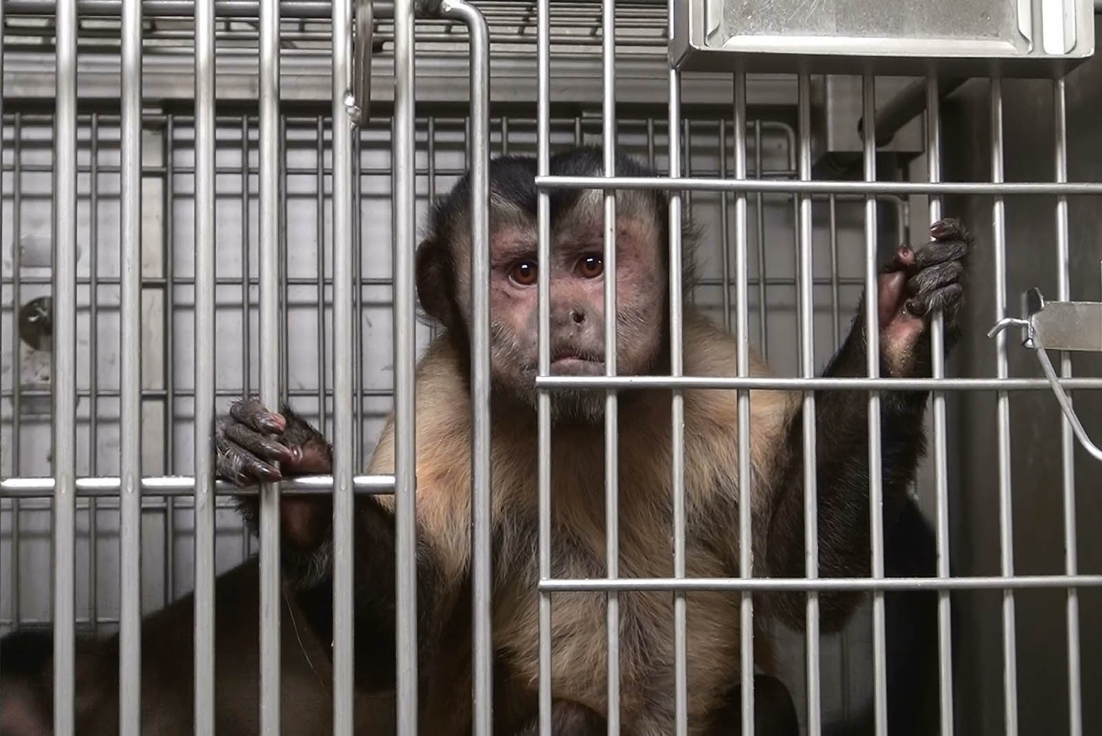 Deutschland verweigert seit 8 Jahren korrekte Umsetzung von EU-Tierversuchsrichtlinien – Helfen Sie jetzt!