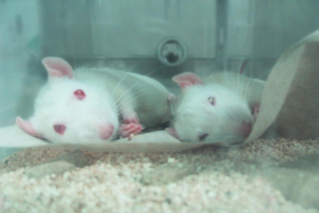 Tierversuche: Gesetze, rechtliche Grundlagen – die aktuelle Situation