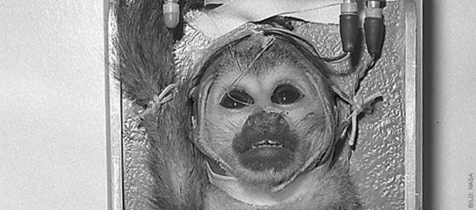 Fordern Sie Russland auf, keine Affen ins All zu schicken