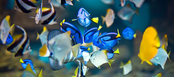 Relativ Fische in Aquarien: Nein Danke! ZV91