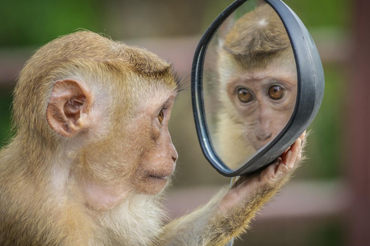 Selbstwahrnehmung: Diese 5 Tiere erkennen sich im Spiegel
