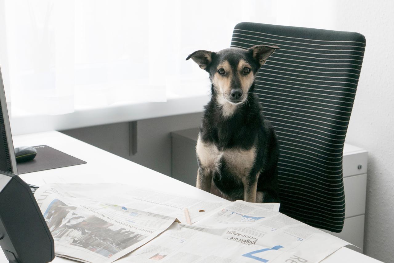 Bürohunde: Die 8 besten Tipps für den Alltag mit Hund im Büro