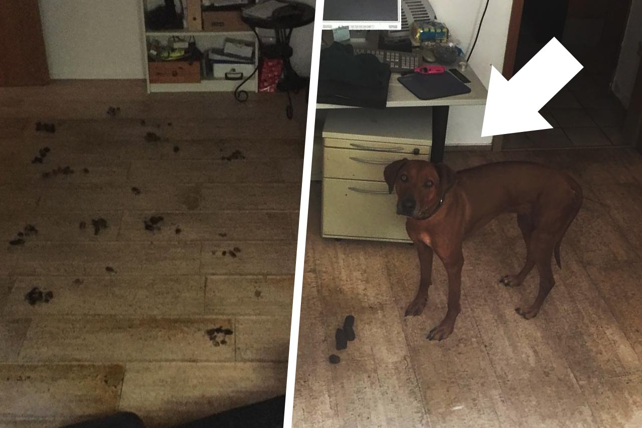 Tierquälerei: Hund aus verwahrloster Kellerwohnung gerettet