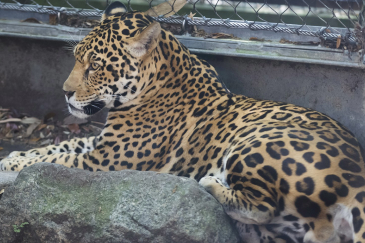 Deutsche Zoos verschachern Tiere über dubiosen Tierhändler