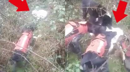 Jagdhunde zerfetzen Katze