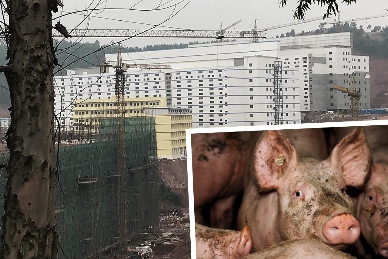 China baut Horror-Stadt aus Schweinehochhäusern