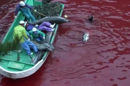 Delfinschlachten in der Taiji Bucht