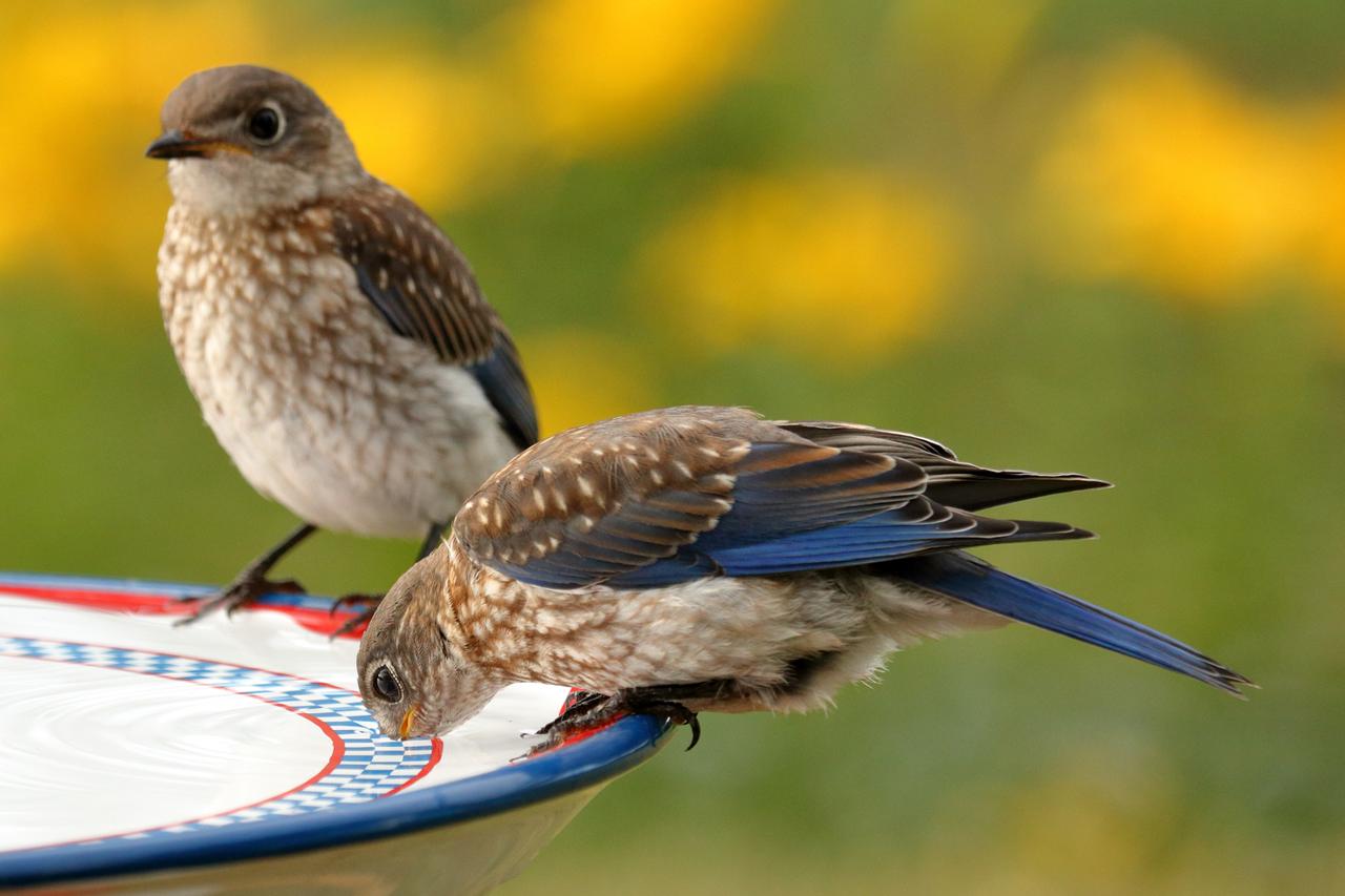 5 einfache Schritte, um Vögel vor dem Verdursten zu retten