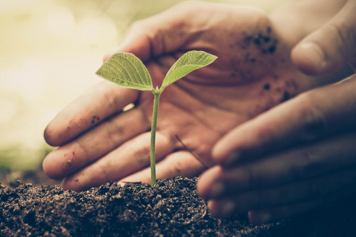 Weltumwelttag: So retten Sie die Welt durch Ihre Ernährung