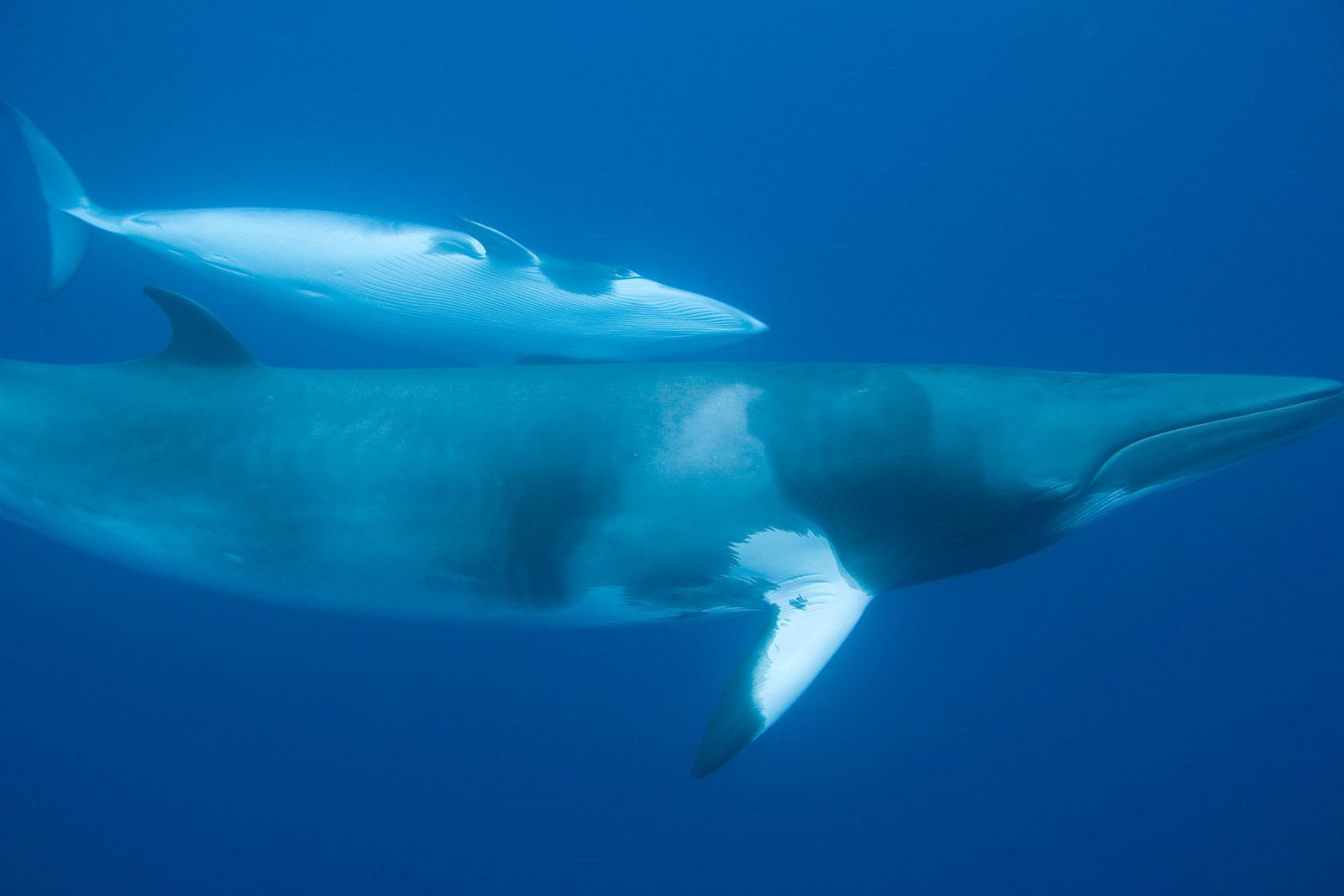 Helfen Sie uns, den Walfang in Norwegen zu stoppen!