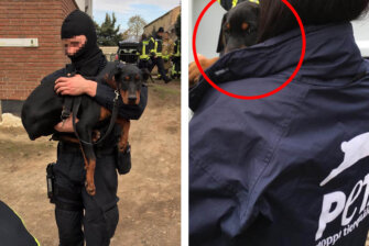 Verstümmelte Hundewelpen aus fensterlosem Keller gerettet