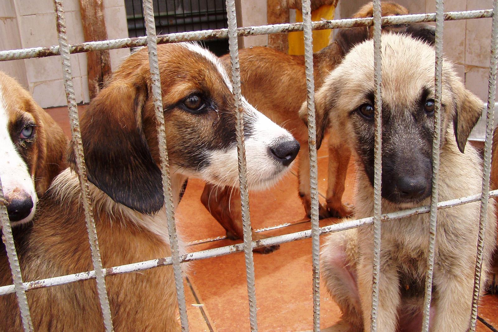 Auslandstierschutz – weil Tierleid keine Ländergrenzen kennt