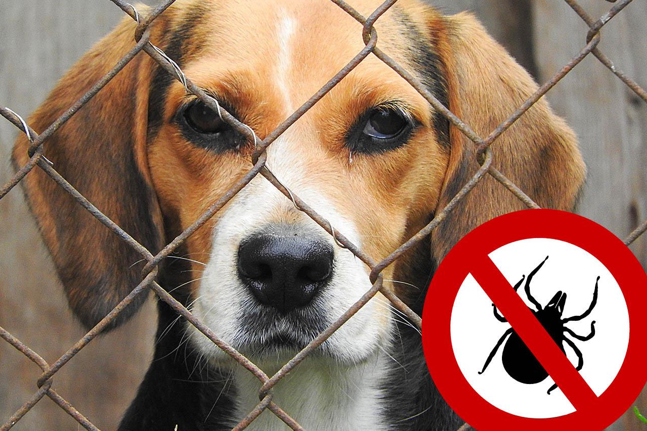Zeckenschutz-Mittel: Tierversuche an Hunden und Katzen