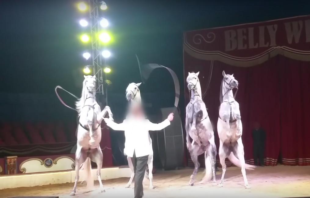 Zirkus Peta Deutschland Ev