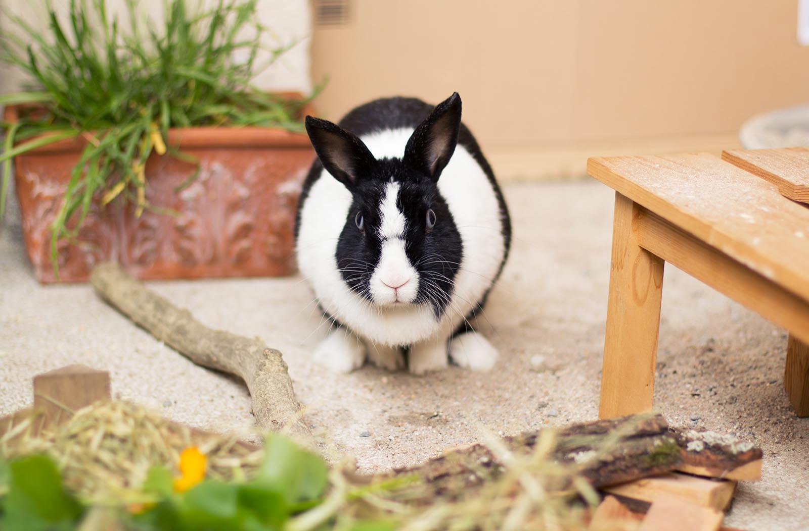Nett Versorgungsdraht Kaninchen Käfige Zeitgenössisch - Elektrische ...